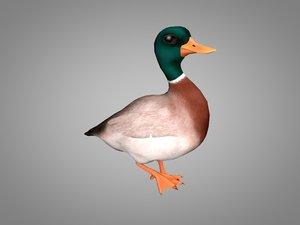 3D drake duck model
