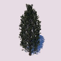 cypress oak tree 3D