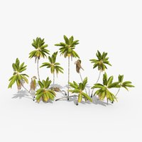 3D cocos coconut palm tree tropical model