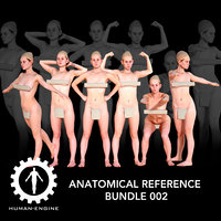 Anatomical Reference Bundle 002