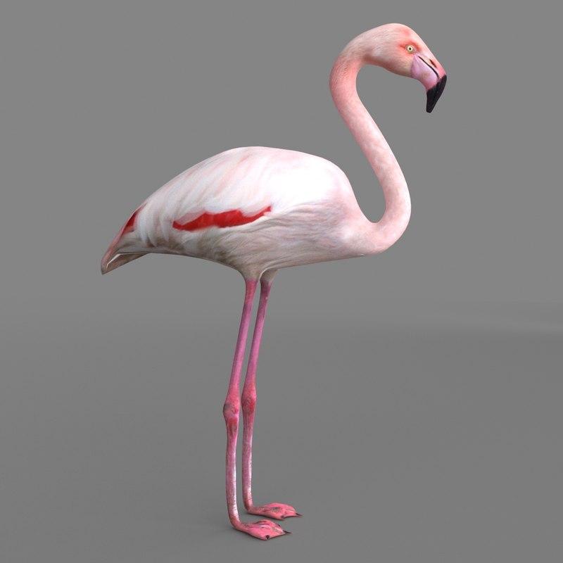 3D model realistic flamingo