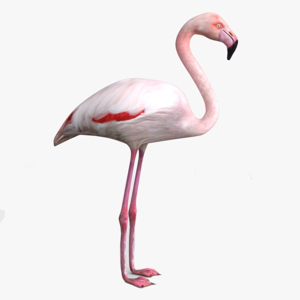 3D model realistic flamingo