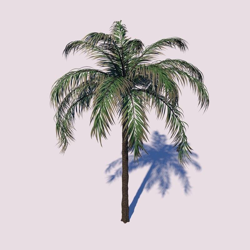 queen palm tree 3D