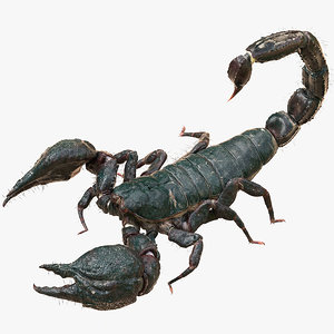 3D model scorpion rigged