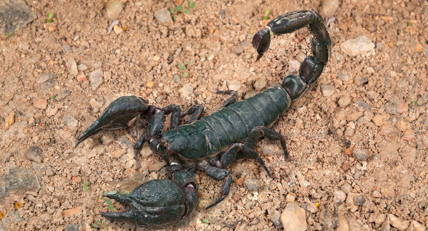 3D model scorpion rigged