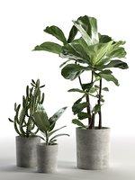 3D model cactus ficus pots