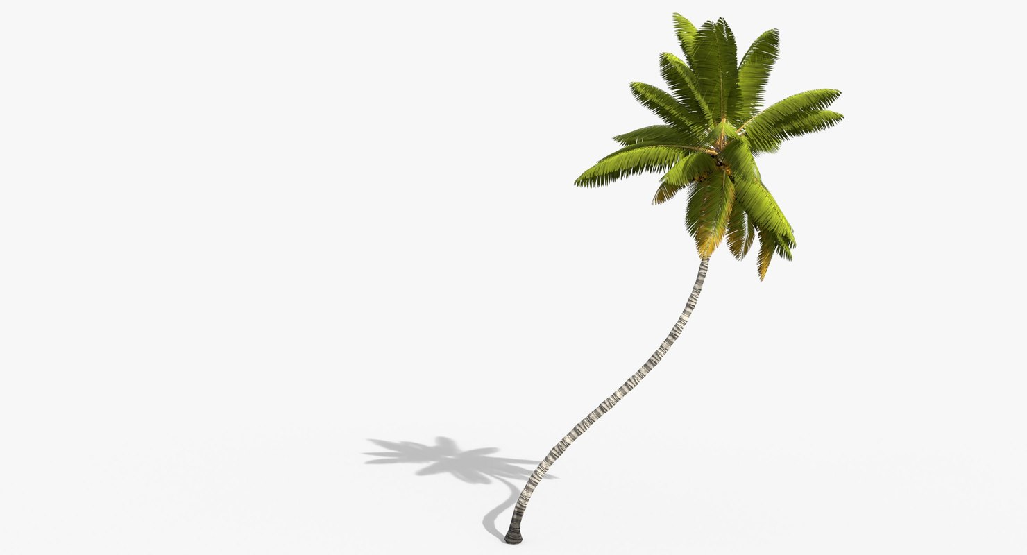 cocos coconut palm tree tropical 3D model