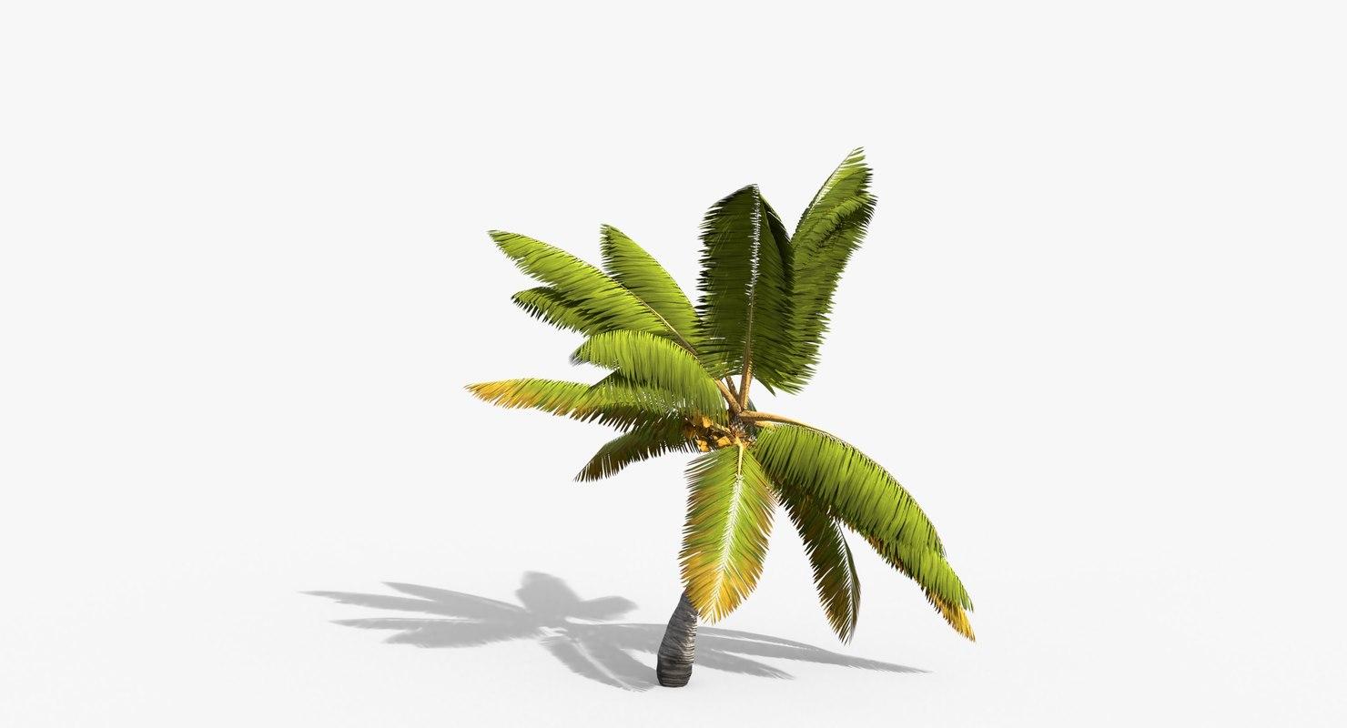 3D cocos coconut palm tree tropical model