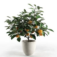 3D citrus tree pot