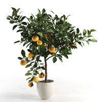 citrus tree pot 2 3D model