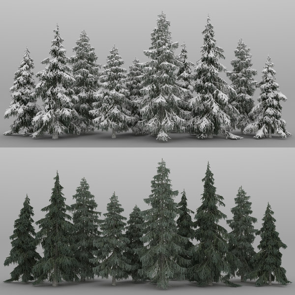 picea trees 10 spruce 3D model