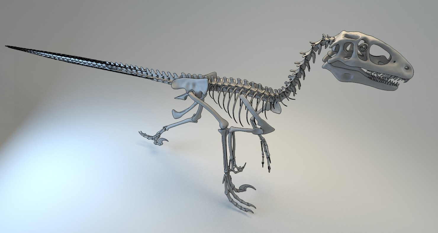3D deinonychus skeleton fossil model