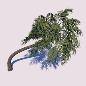 3D model curvy palm tree