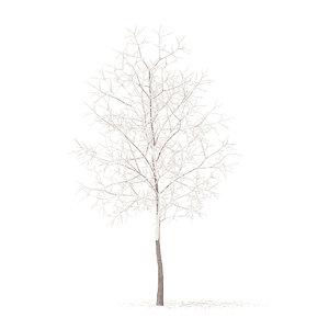 white oak snow 3 3D