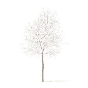 white oak snow 5 3D model