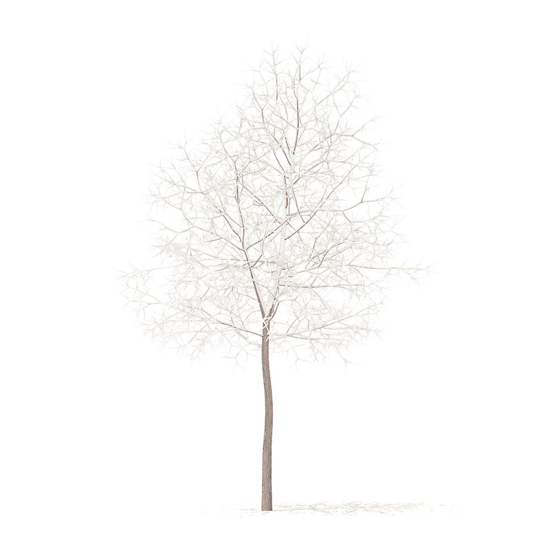 white oak snow 5 3D model