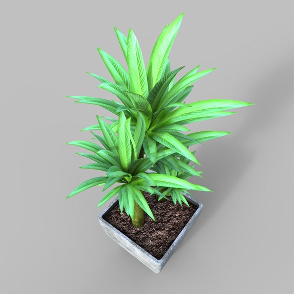 potted plant 3 3D