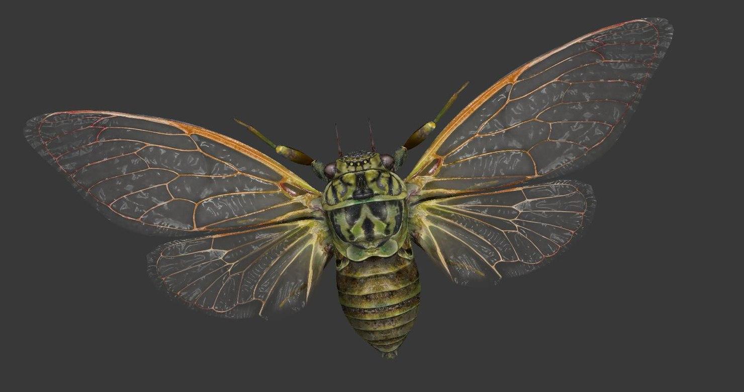 cicada games 3D model