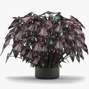 3D model tropical leaves