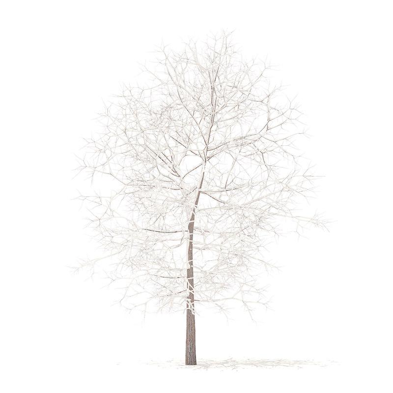 white oak snow 6 model