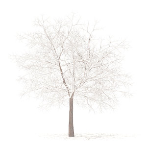 3D white oak snow 7