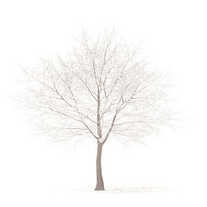 white oak snow 10 3D model