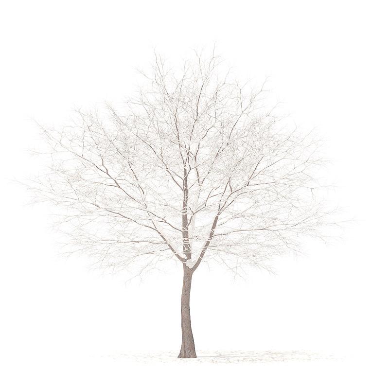 white oak snow 10 3D model