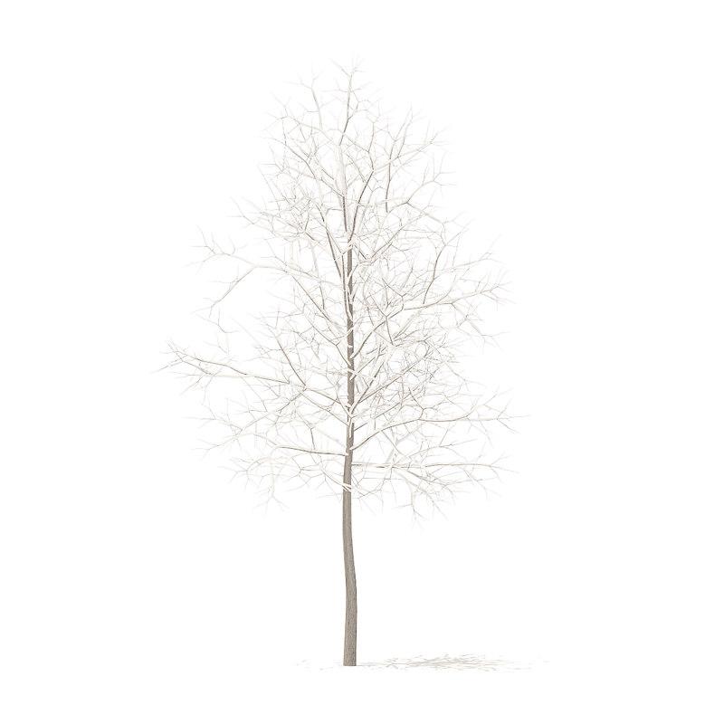 3D sugar maple snow 3