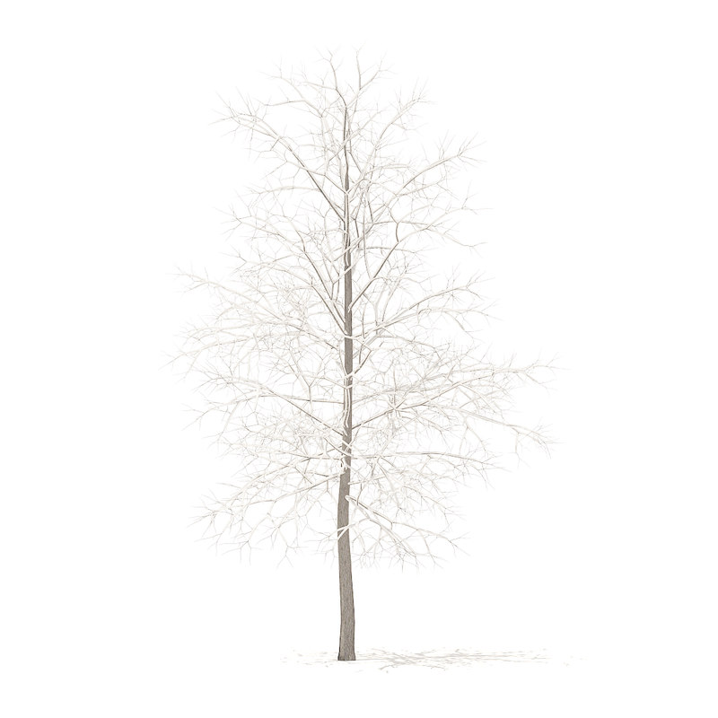 3D sugar maple snow 4