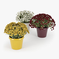 3D chrysanthemum plant flower