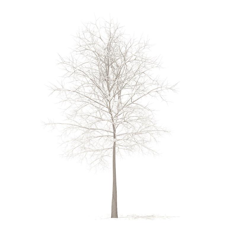 sugar maple snow 7 3D