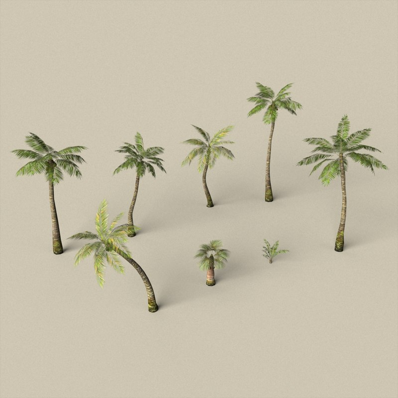 3D ready palm tree