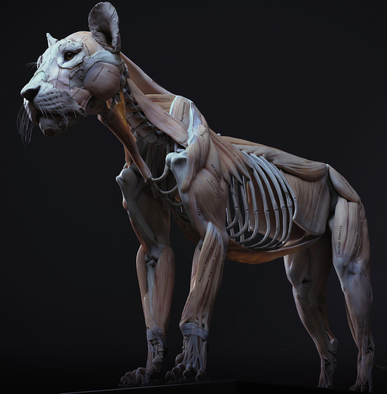 3D lion anatomy
