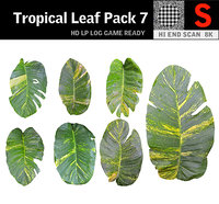 tropical leaf pack 3D model