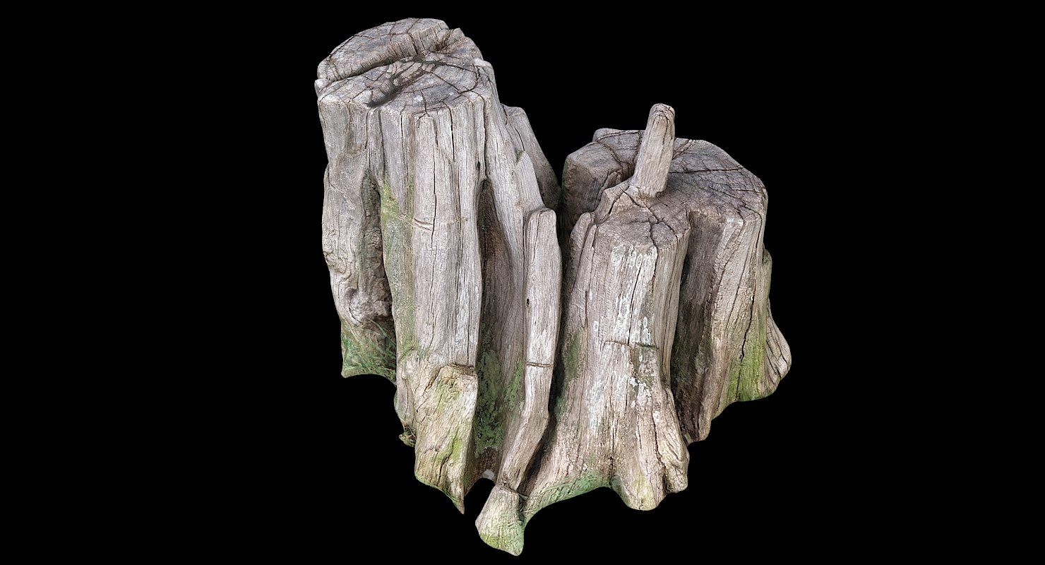 scan tree trunk 3D model