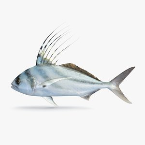 roosterfish pbr 3D model