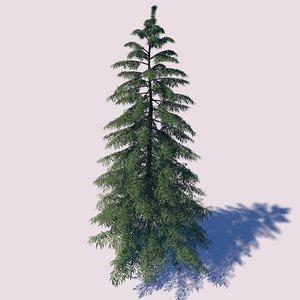yellow cypress tree 3D