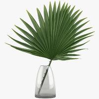 Palm_002