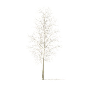 3D quaking aspen snow 3 model