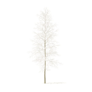 3D quaking aspen snow 7m