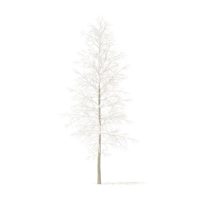 3D quaking aspen snow 7m