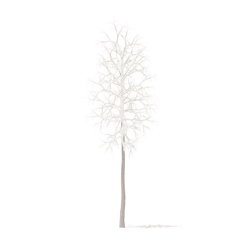american sweetgum snow 2 3D model