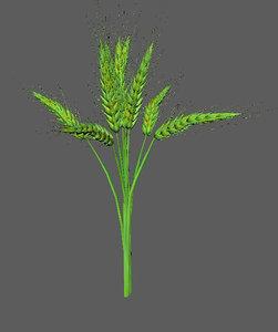 wheat green 3D