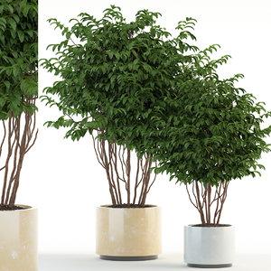 3D plants 91