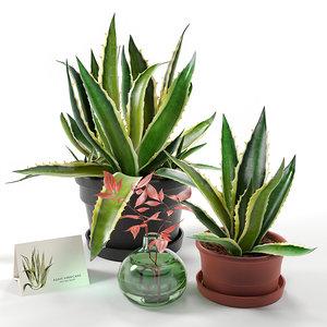agave set model