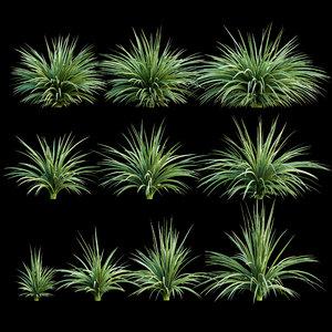 yucca plant exterior 3D model