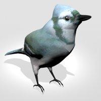 3D bird animal wildlife model