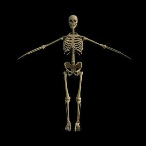 3D rigged skeleton