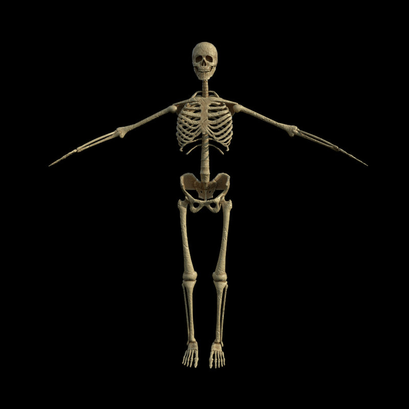 3D rigged skeleton