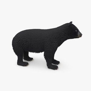 3D black bear fur